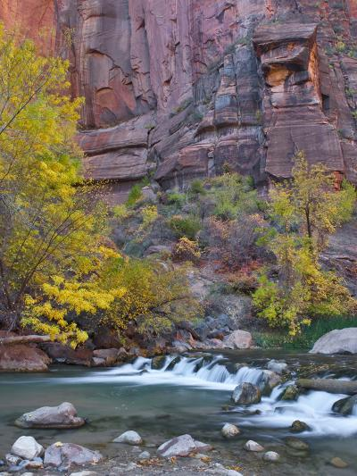 USA, Utah, Zion National Park. the Narrows with Cottonwood Trees in Autumn-Jaynes Gallery-Photographic Print
