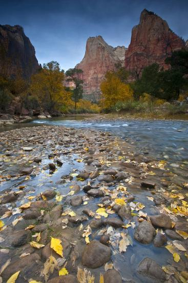 USA, Utah, Zion National Park. the Sentinel with Fallen Leaves in Virgin River-Jaynes Gallery-Photographic Print