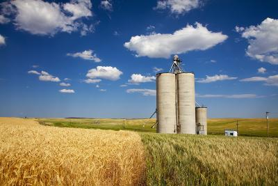 USA, Washington, Davenport. Silos Surrounded by Fields of Wheat-Terry Eggers-Photographic Print