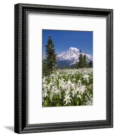 USA, Washington, Mount Rainier NP. Avalanche Lilies and Mount Rainier-Jaynes Gallery-Framed Photographic Print