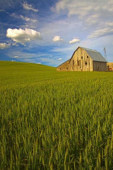 USA, Washington, Palouse. Old Barn in Field of Spring Wheat (Pr)-Terry Eggers-Photographic Print