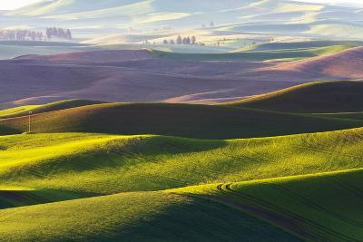 USA, Washington, Palouse. Rolling Hills Covered by Fields of Peas-Terry Eggers-Photographic Print