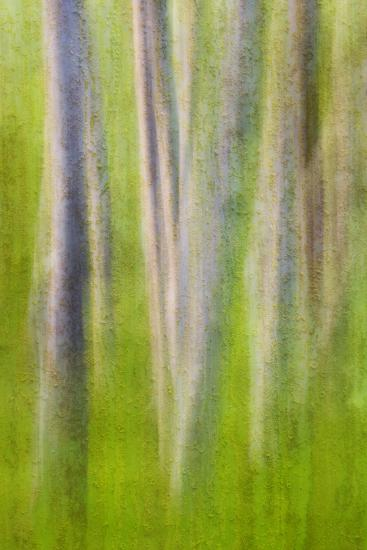 USA, Washington State. Alder Tree Abstract-Don Paulson-Photographic Print