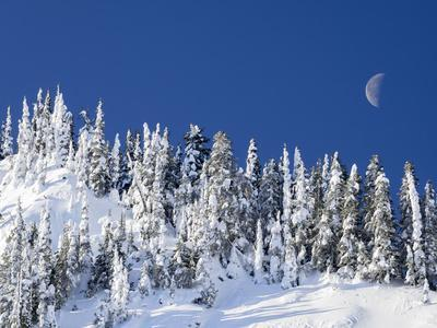 https://imgc.artprintimages.com/img/print/usa-washington-state-crystal-mountain-snow-covered-trees-and-moon-in-blue-sky_u-l-q1gxla60.jpg?p=0