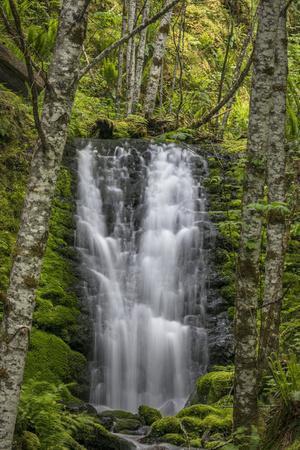 https://imgc.artprintimages.com/img/print/usa-washington-state-gifford-pinchot-national-forest-waterfall-scenic_u-l-q1gbjwr0.jpg?p=0