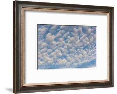 USA, Washington State. Mackerel sky makes compelling patterns in bright blue sky-Trish Drury-Framed Photographic Print