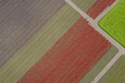 https://imgc.artprintimages.com/img/print/usa-washington-state-mount-vernon-rows-of-color-at-tulip-farm_u-l-q1gxlwm0.jpg?p=0