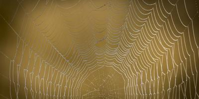 https://imgc.artprintimages.com/img/print/usa-washington-state-olympic-national-park-dew-covered-spider-web_u-l-q1gbrk80.jpg?p=0
