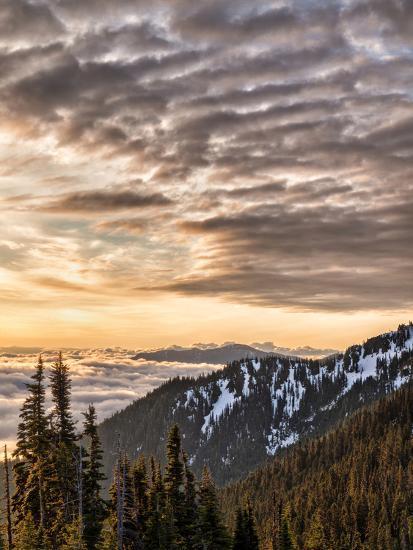 USA, Washington State, Olympic National Park, View towards Hurricane Ridge-Ann Collins-Photographic Print