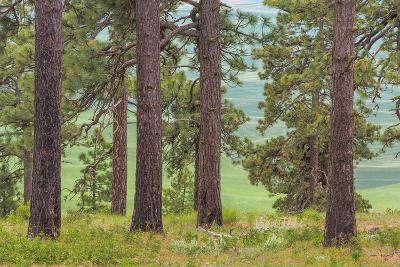 USA, Washington State, Palouse Hills. Pine Forest Scenic-Don Paulson-Photographic Print
