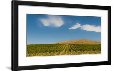 USA, Washington State, Red Mountain. Quintessence vineyard with Red Mountain in the background.-Richard Duval-Framed Photographic Print