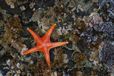 https://imgc.artprintimages.com/img/print/usa-washington-state-salt-creek-recreation-area-blood-star-on-beach_u-l-q1h2g4w0.jpg?p=0
