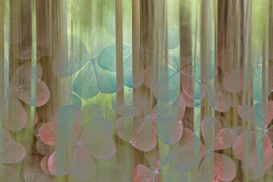 USA, Washington State, Seabeck. Collage of Oxalis and Trees-Don Paulson-Photographic Print