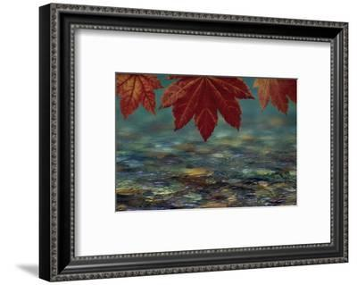 USA, Washington State, Seabeck. Composite of vine maple over river.-Jaynes Gallery-Framed Photographic Print