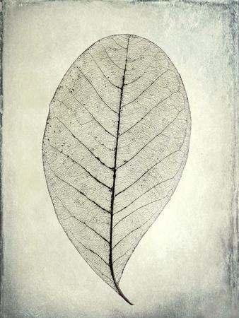 https://imgc.artprintimages.com/img/print/usa-washington-state-seabeck-skeletonized-leaf-close-up_u-l-q1d32670.jpg?p=0