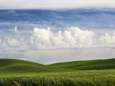 https://imgc.artprintimages.com/img/print/usa-washington-state-spring-fields-of-wheat-peas-and-barley_u-l-q1gb3lu0.jpg?p=0