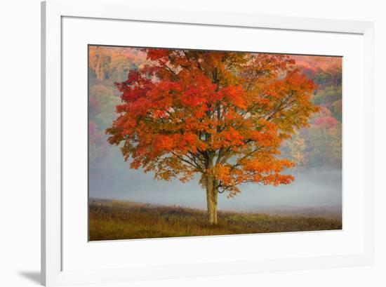 USA, West Virginia, Canaan Valley State Park. Lone tree and forest in fog.-Jaynes Gallery-Framed Premium Photographic Print