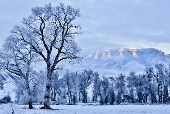 USA, Wyoming, Shell, Hoar Frost in the Valley-Hollice Looney-Premium Photographic Print