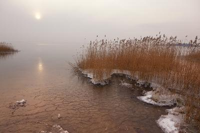 Usedom, Achterwasser, Reed, Frost-Catharina Lux-Photographic Print