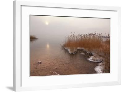 Usedom, Achterwasser, Reed, Frost-Catharina Lux-Framed Photographic Print