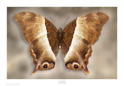 Usshers Palla-Richard Reynolds-Art Print