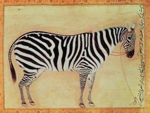 """Zebra, from the """"Minto Album,"""" Mughal, 1621 by Ustad Mansur"""