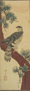 Hawk on Pine Branch, Summer, September 1853 by Utagawa Hiroshige