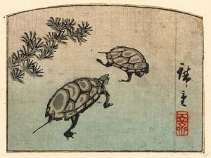 Kame by Utagawa Hiroshige
