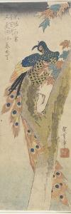 (Peacock on Maple Tree), Early 19th Century by Utagawa Hiroshige