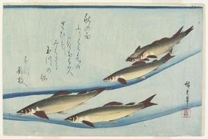 River Trouts in Stream, Early 19th Century by Utagawa Hiroshige