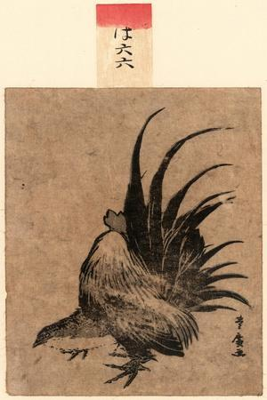 Niwatori, Chicken. [Between 1804 and 1818], 1 Print : Woodcut, Color ; 17.2 X 11.4