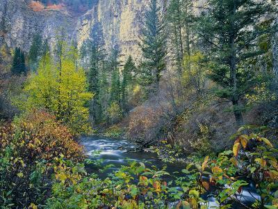 Utah. Along Logan River in Autumn. Logan Canyon. Uinta-Wasatch-Cache-Scott T^ Smith-Photographic Print