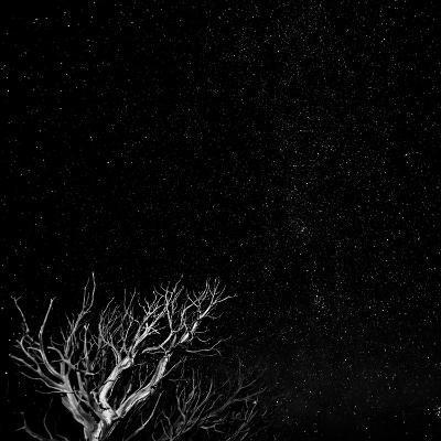 Utah, Capitol Reef National Park. Dead Tree and Night Sky-Jaynes Gallery-Photographic Print