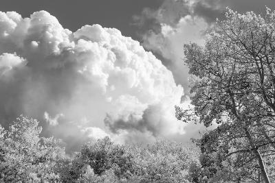 Utah, Fishlake National Forest. Black and White of Aspens and Clouds-Jaynes Gallery-Photographic Print