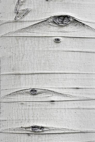 Utah, Fishlake National Forest. Detail of Aspen Tree Trunk-Jaynes Gallery-Photographic Print