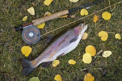 Utah, Fishlake National Forest. Rainbow Trout and Fly Rod-Jaynes Gallery-Photographic Print
