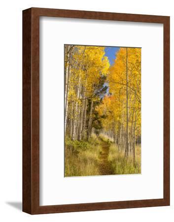 Utah, Fishlake National Forest. Trail in Aspen Trees-Jaynes Gallery-Framed Photographic Print