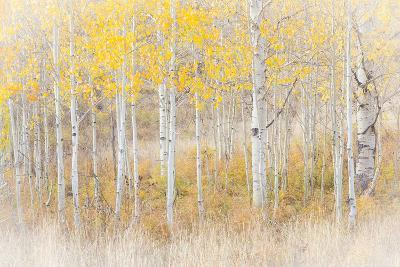Utah, Manti-La Sal National Forest. Aspen Forest Scenic-Jaynes Gallery-Photographic Print
