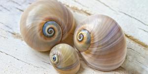 Colorful Sea Snails on Wood by Uwe Merkel