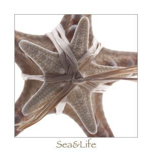 Maritime Still Life with Starfishes by Uwe Merkel