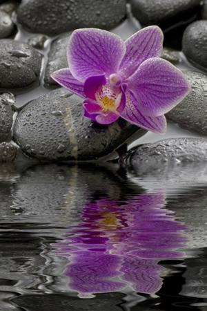 Orchid Blossom on Black Stones, Water, Reflection