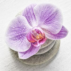 Orchid Blossom on Tower Made of Stones by Uwe Merkel