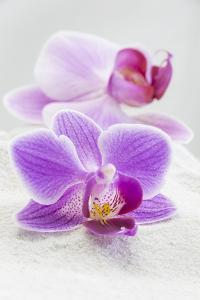 Orchid Blossoms on White Sand by Uwe Merkel