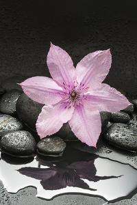 Pink Blossom on Black Stones by Uwe Merkel