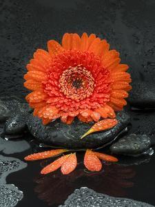 Red Blossom on Black Stones by Uwe Merkel
