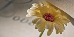 Romantic Still Life with Blossom by Uwe Merkel
