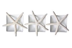 Starfishes by Uwe Merkel