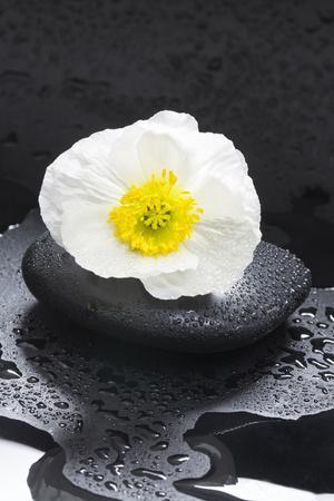 White Blossom on Black Stones