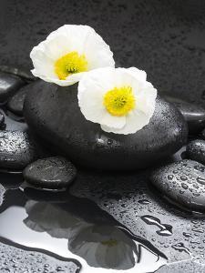 White Blossoms on Black Stones by Uwe Merkel