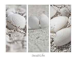 White Conches on the Beach by Uwe Merkel
